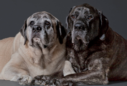 Helping Our Pets Age Gracefully – The Noninvasive Way